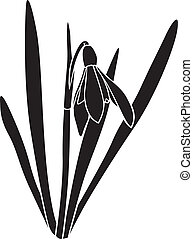 Silhouette snowdrops flower - Silhouette image spring...