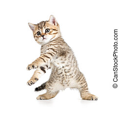 Funny dancing kitten on white background