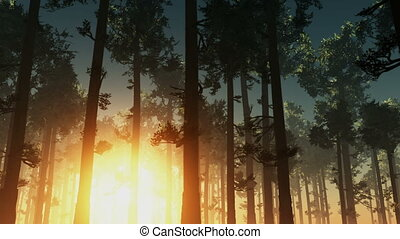 rising sun light in forest