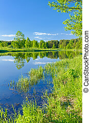 Sunny landscape with The Narew braided river - Sunny...