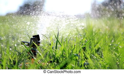 Watering grass in park.