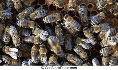 Bees swarming on a honeycombBees sw - Bees swarming on a...