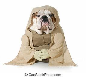 wise dog - english bulldog wearing munk costume isolated on...