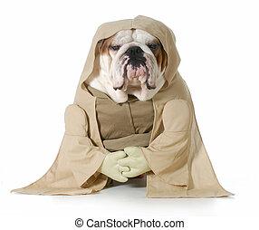 wise dog - english bulldog wearing munk costume isolated on...