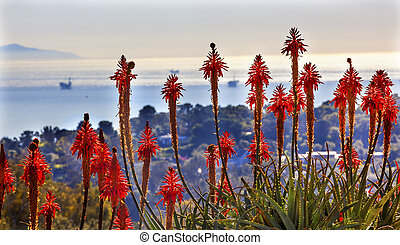 Orange Aloe Arborescens Cactus Flowers Oil Platforms Morning...