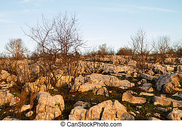 Burned Landscape - Burned plants among rocks against blue...