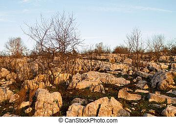 Burned Landscape - Burned plants among rocks against blue...