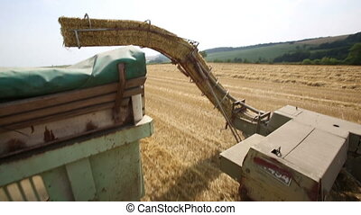 Tractor collecting a straw and creating bales