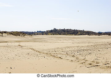Sand landscape, National Park Zuid Kennemerland, The...