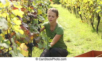 Young woman on the vineyard