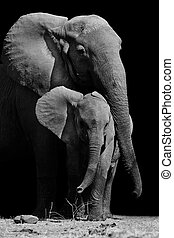 Mother Elephant and Baby - Black & White image of a mother...