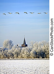 Migrating Greylag Geese - A flight of migrating greylag...