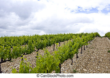 Vineyard on an overcast day in the Cote du Rhone region,...