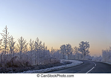 Winter morning - The frosted trees and bushes along a...