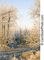 Winter Orchard - Orchard entrance in the winter, with...