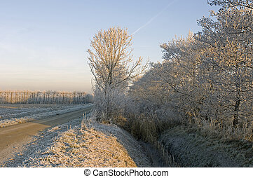 Winter Orchard - The ditches and hoarfrost covered hedges...