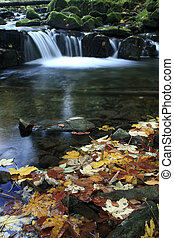 Colorful Leaves on a Creek - Water Cascade on Satina Creek...