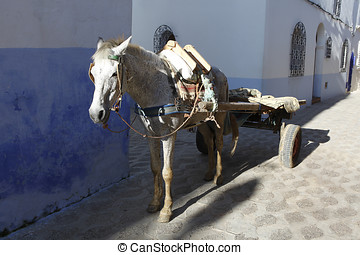 Horse carts in Morocco