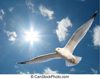 Seagull in Sunshine - Soaring seagull in blue sky with...