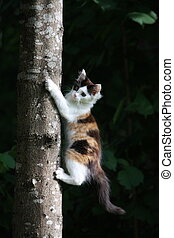 Cute three colored kitten climbing on the tree - Adorable...