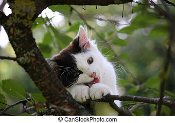 Cute three colored kitten gnawing on tree branch - Cute...