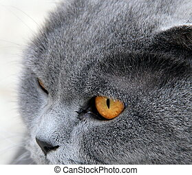 Portrait of a gray wide-eyed cat