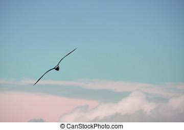 Seagull Flight 2