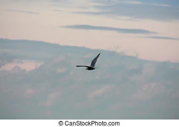 Seagull Flight 3