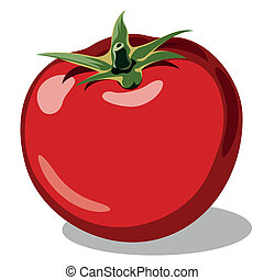 red ripe tomato vector illustration isolated on white...
