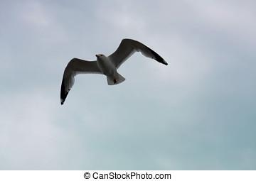 Seagull Flight 4