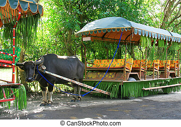 carabao ride - a water buffalo rigged to a huge cart
