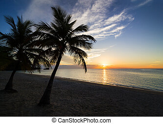 Sunset on the beach - Palm black outline during sunset on...