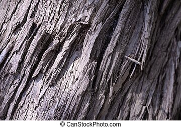 Bark - A close up shot of the bark off an Australian Gum...