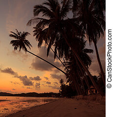 Idyllic tropical island beach at sunset with palm tree silhouette