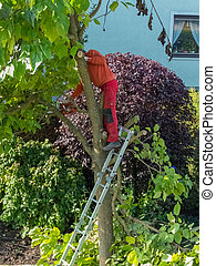 gardener at work - a gardener cuts around a tree working in...