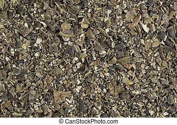 bladderwrack seaweed - Background of dried bladderwrack...