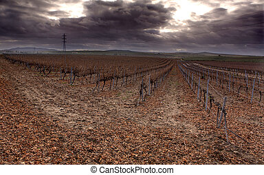 Autumn vineyard field after the harvest - Cropland of...