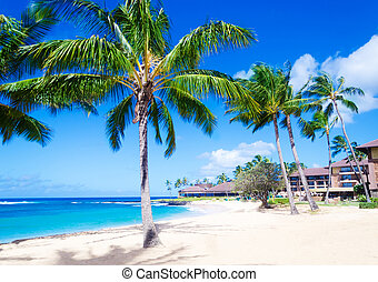 Coconut Palm trees on the sandy beach in Hawaii, Kauai -...