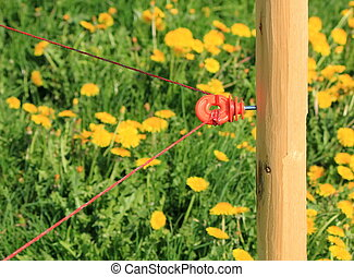 Agricultural electric fence - Close up on agricultural...
