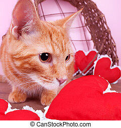 Valentine Cat - Valentine cat with red hearts