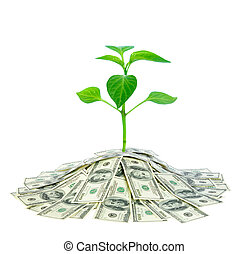 plant in money - green plant in pile of money isolated on...