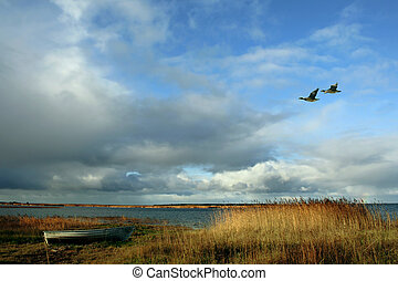 Two geese against the sky - Ashore reeds and a boat