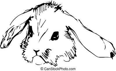 image of a rabbit with long ears