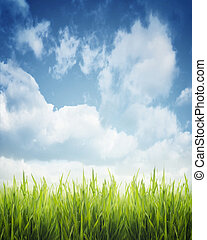 Grass - Green grass and blue sky
