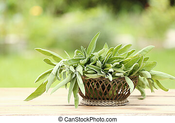 Arrangement of fresh sage in a basket - Arrangement of...
