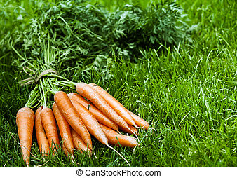 Bunch of fresh orange carrots on green grass - Bunch of...