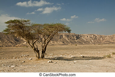 desert, tree - Morning in the desert, single tree