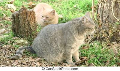 Cat eating grass