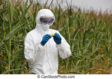 gmo - engineer examining corn - biotechnology engineer...
