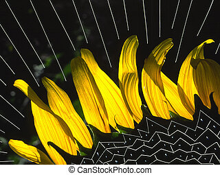 Abstraction - sunflower